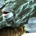 Video thumbnail for youtube video Cat and Dolphin Playing Together on Youtube Video